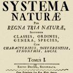 Gerarchia sistematica