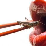 Cena a base di insetti