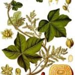 Katefte Fruit